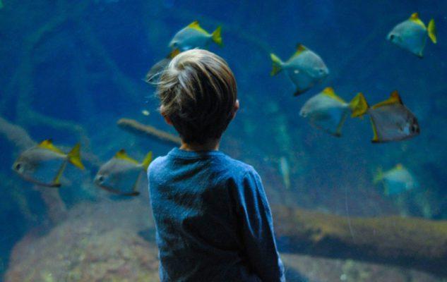 L'Acquario Civico di Milano: un meraviglioso viaggio tra pesci tropicali e fondali marini