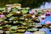Lago Azzurro del Parco della Brughiera Briantea