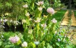 L'Orto botanico di Brera a Milano: un concentrato di natura, bellezza e romanticismo
