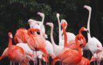 Fenicotteri Rosa a Milano: magici incontri nei giardini di Villa Invernizzi