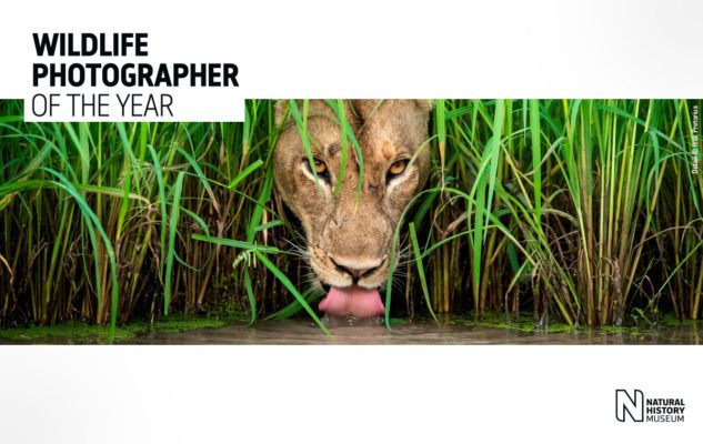 Wildlife Photographer of the Year: a Milano le fotografie naturalistiche più belle del 2019