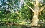 I 5 parchi e giardini più belli di Milano: un universo verde tutto da scoprire