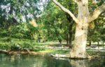 La Dama Nera: il misterioso fantasma del Parco Sempione a Milano